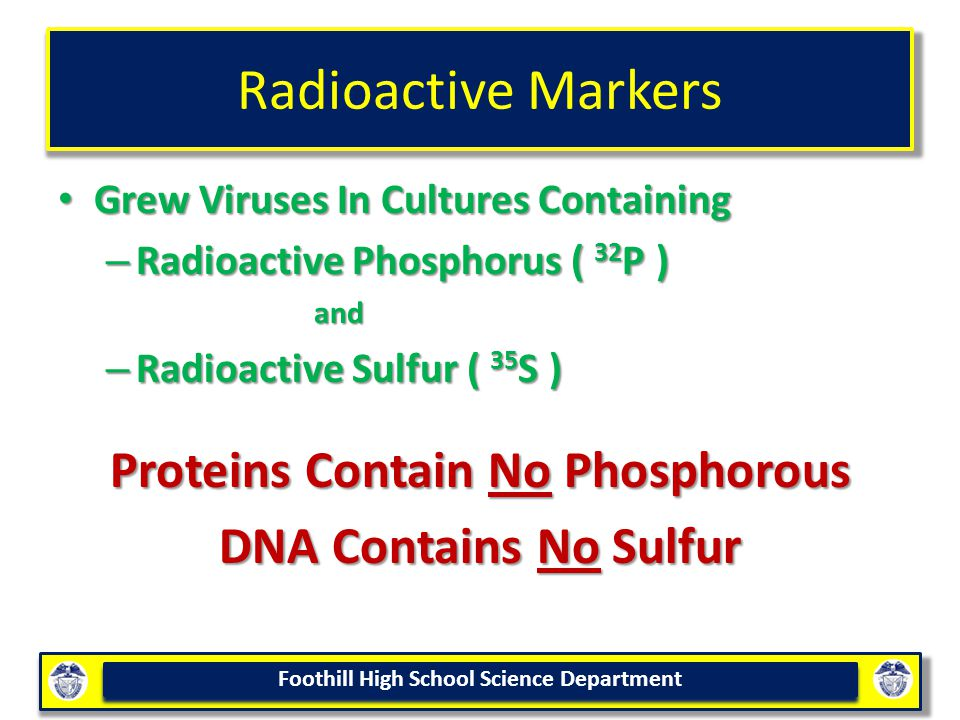 Proteins Contain No Phosphorous