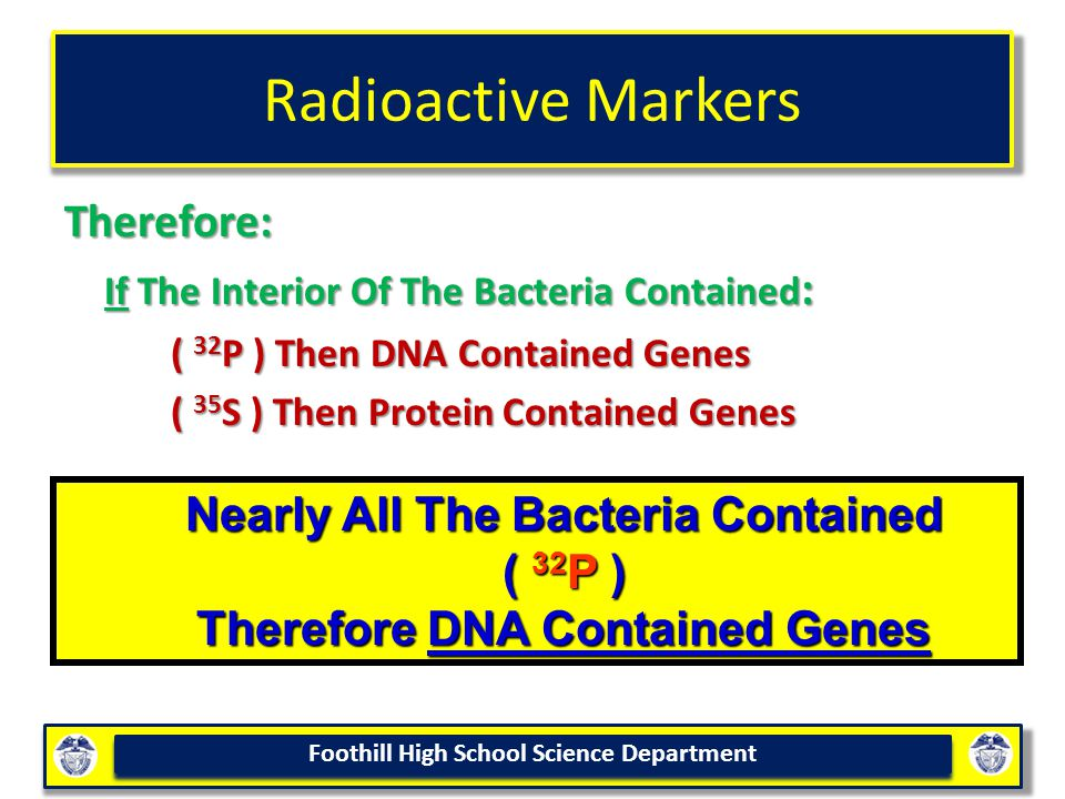 Nearly All The Bacteria Contained Therefore DNA Contained Genes