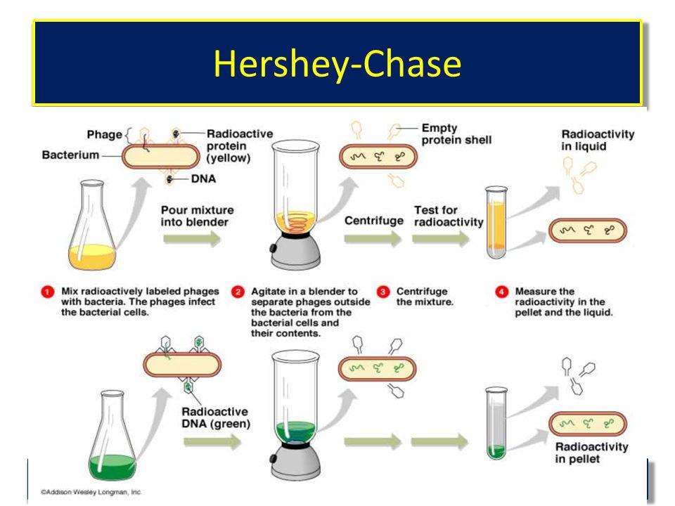 Hershey-Chase