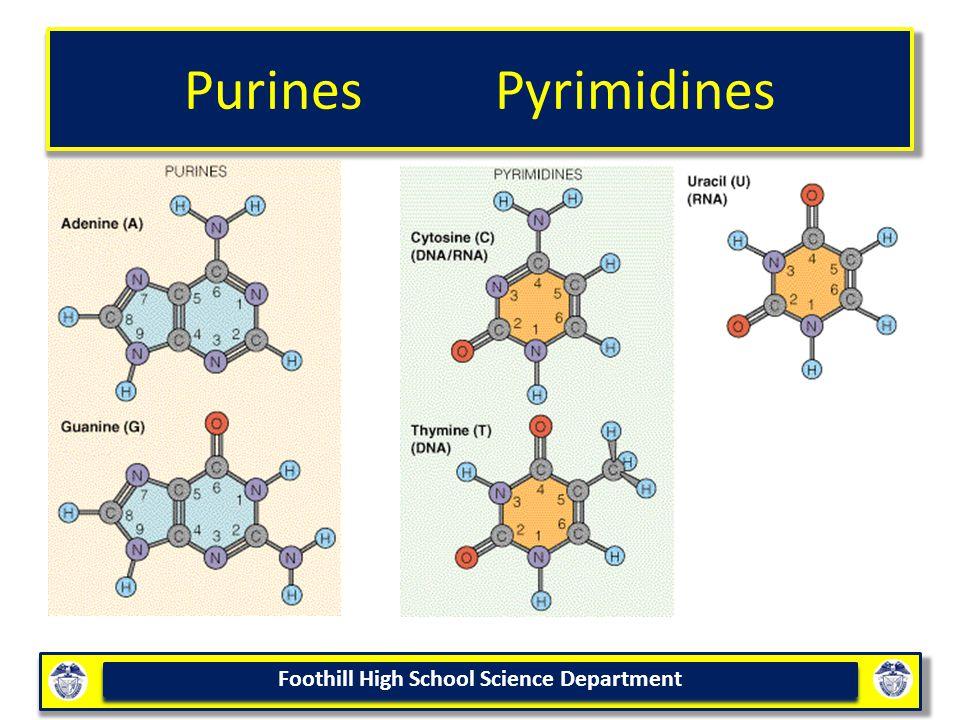 Purines Pyrimidines