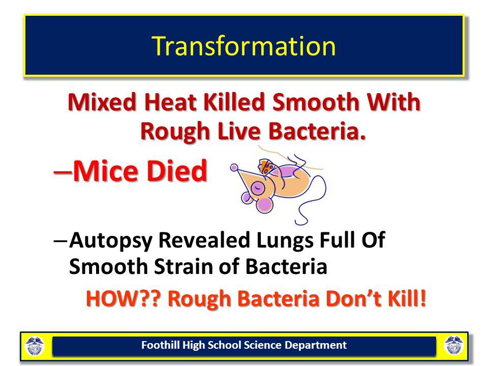 Mice Died Transformation