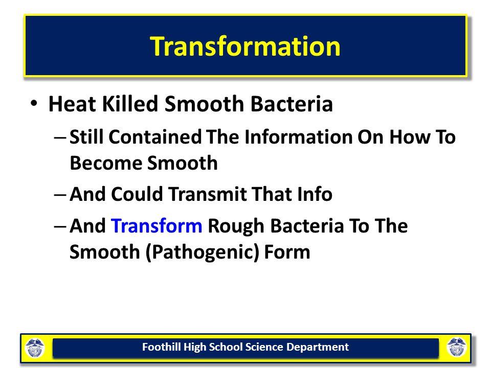 Transformation Heat Killed Smooth Bacteria