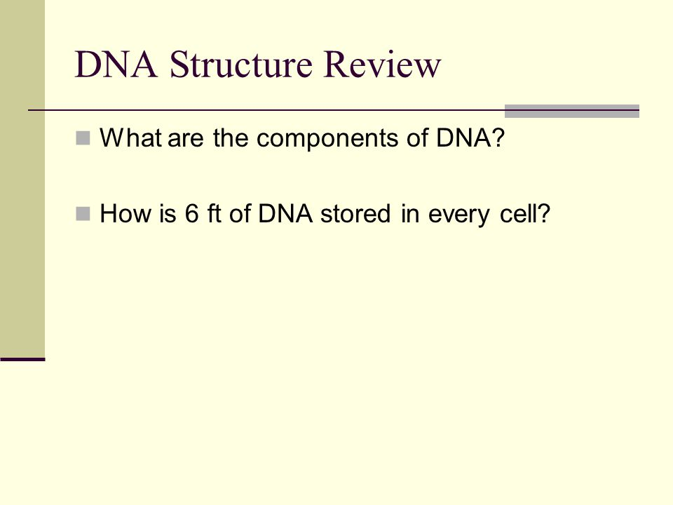 DNA Structure Review What are the components of DNA