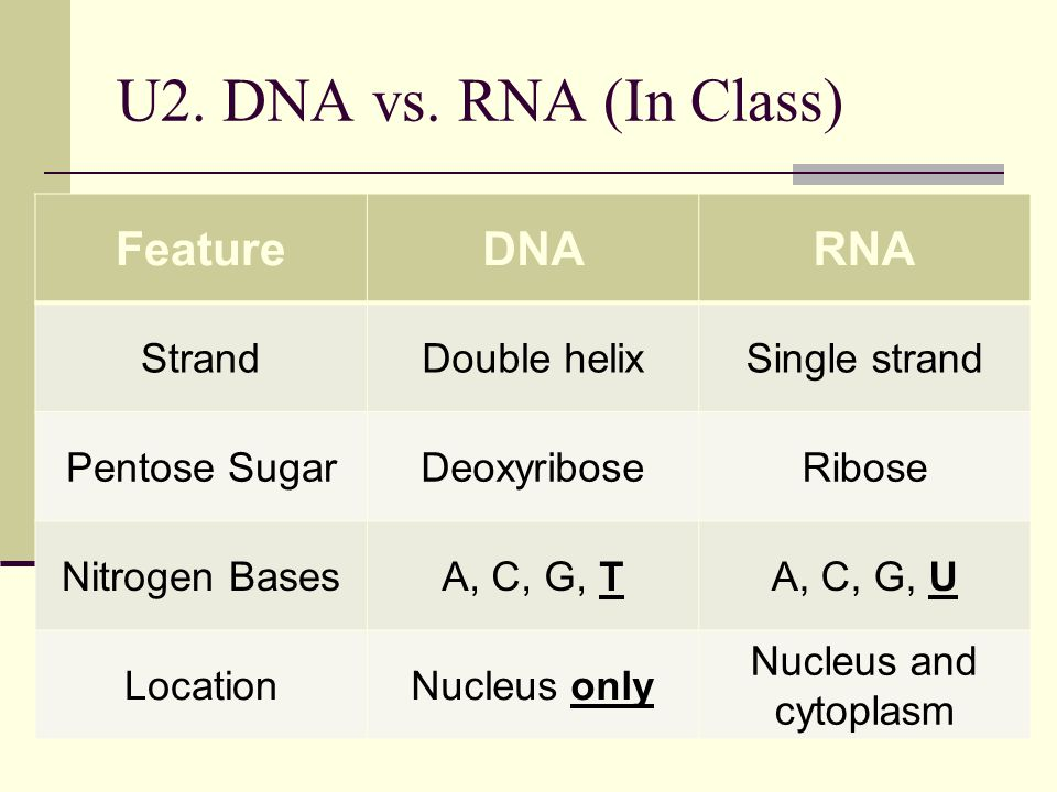 U2. DNA vs. RNA (In Class) Feature DNA RNA Strand Double helix