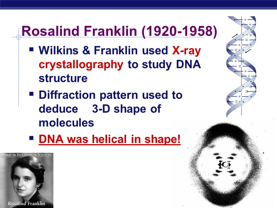 Rosalind Franklin (1920-1958) Wilkins & Franklin used X-ray crystallography to study DNA structure.