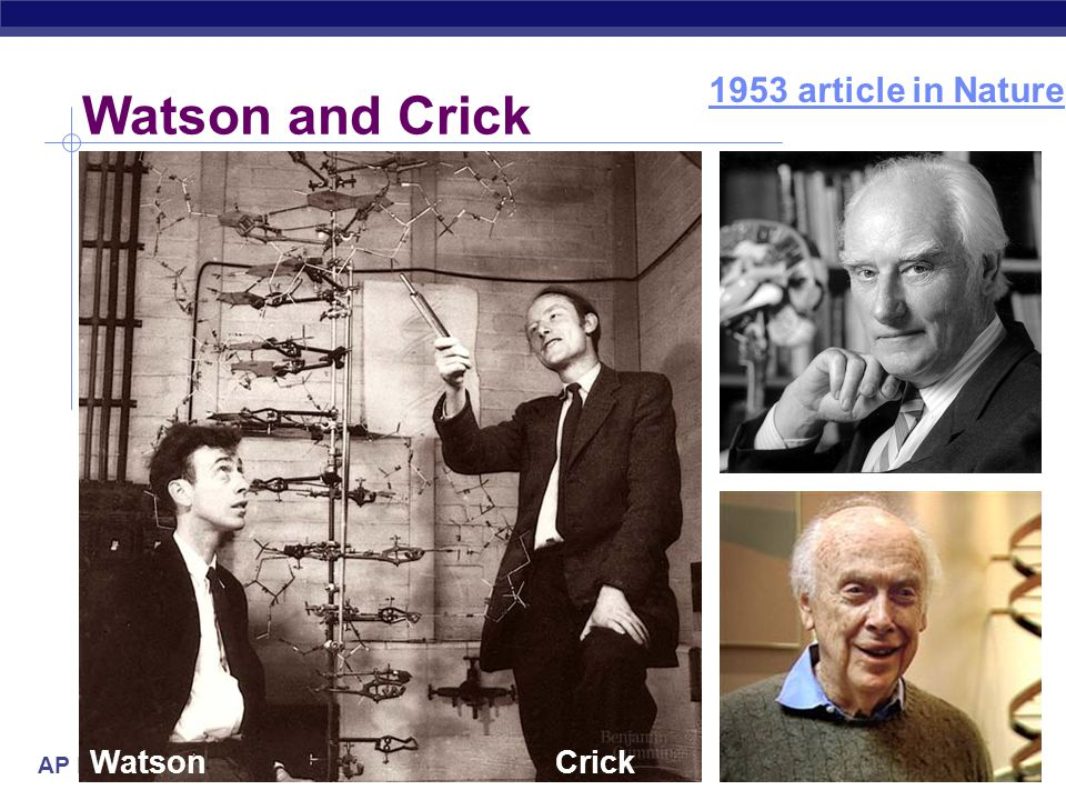 1953 article in Nature Watson and Crick Watson Crick