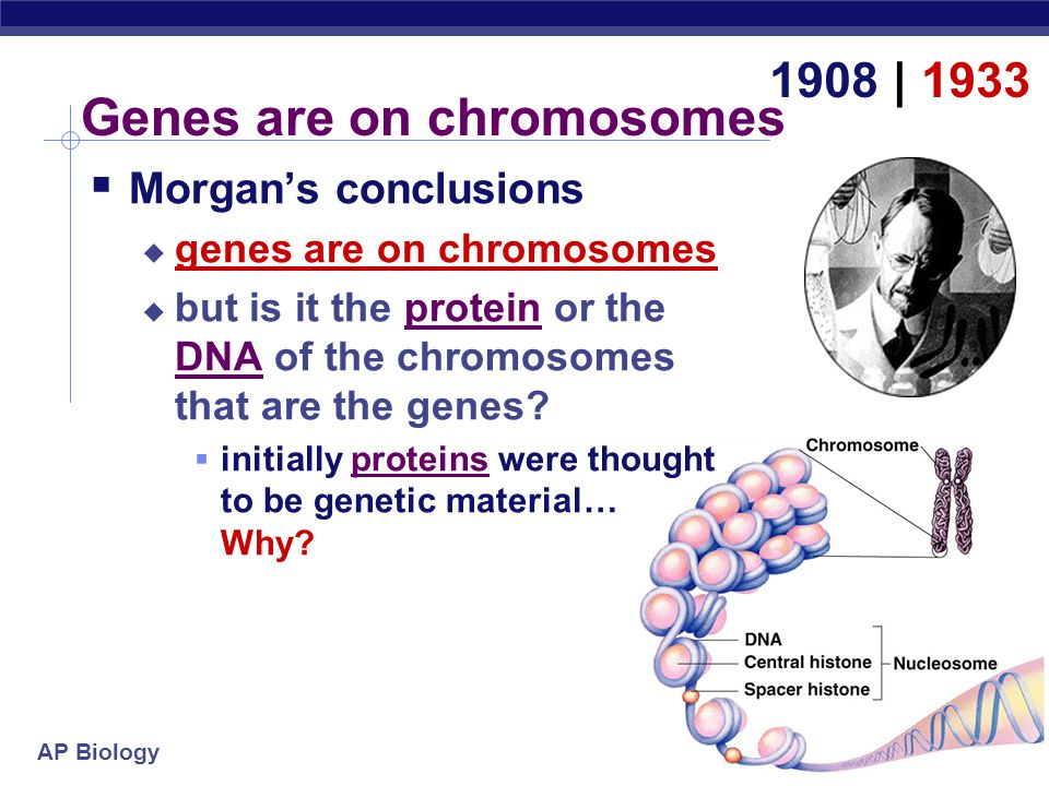 Genes are on chromosomes