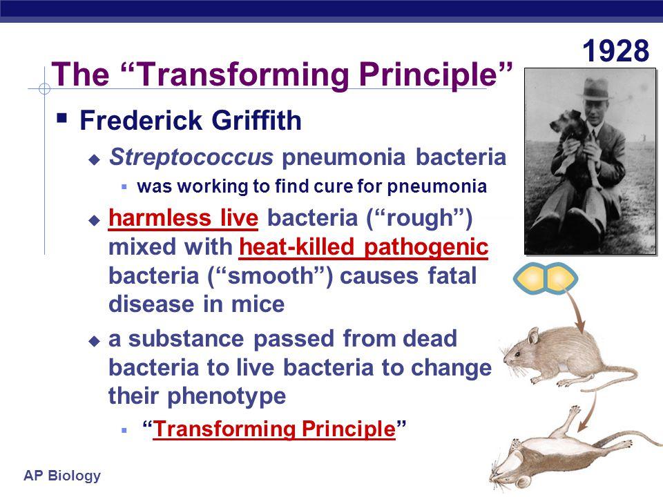 The Transforming Principle