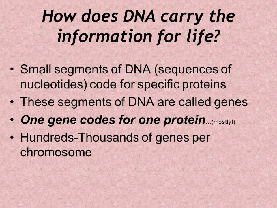 How does DNA carry the information for life