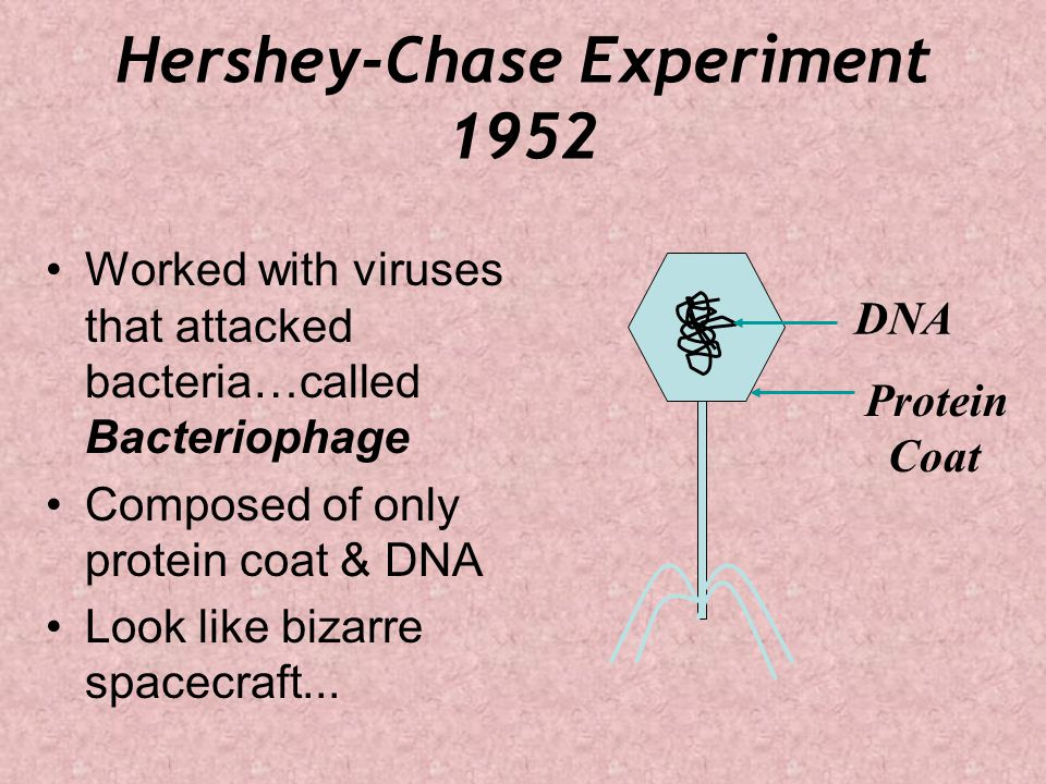 Hershey-Chase Experiment 1952