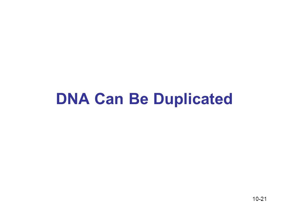 DNA Can Be Duplicated