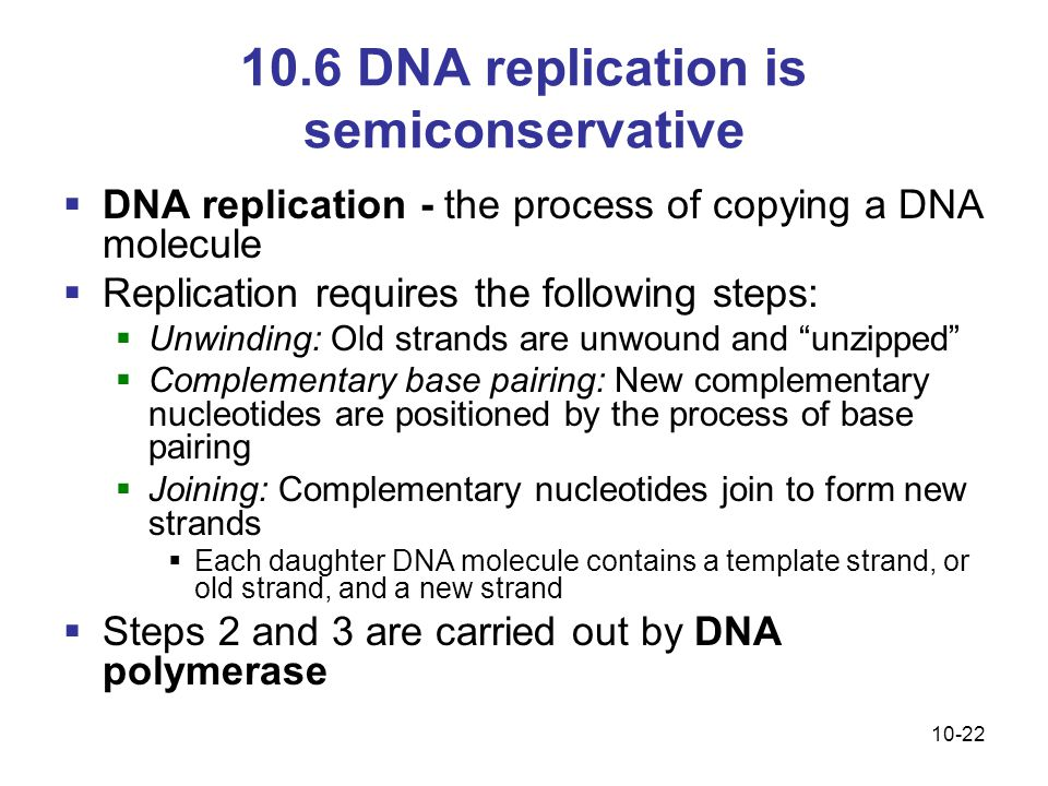 10.6 DNA replication is semiconservative