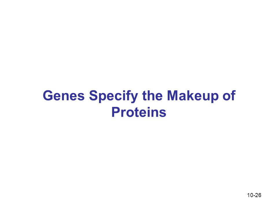 Genes Specify the Makeup of Proteins