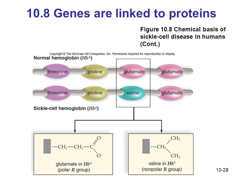 10.8 Genes are linked to proteins