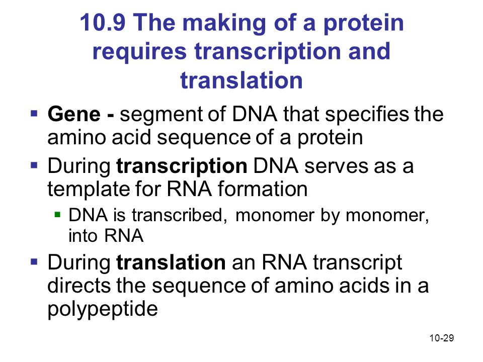 10.9 The making of a protein requires transcription and translation