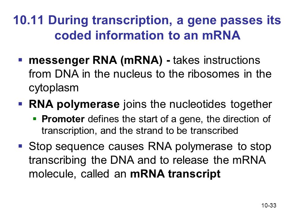 10.11 During transcription, a gene passes its coded information to an mRNA
