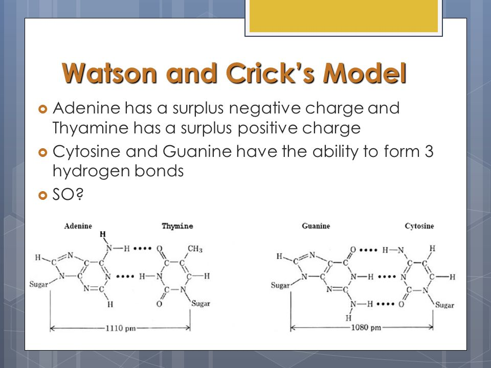 Watson and Crick's Model