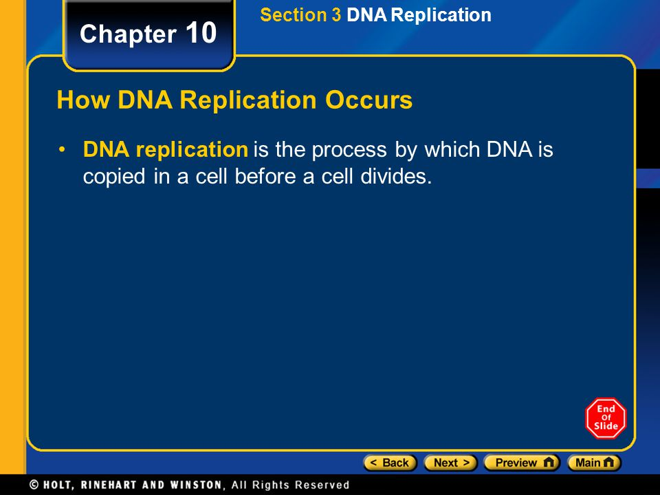 How DNA Replication Occurs