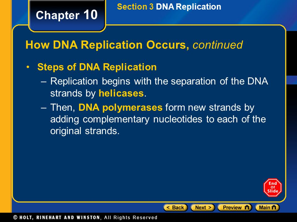 How DNA Replication Occurs, continued