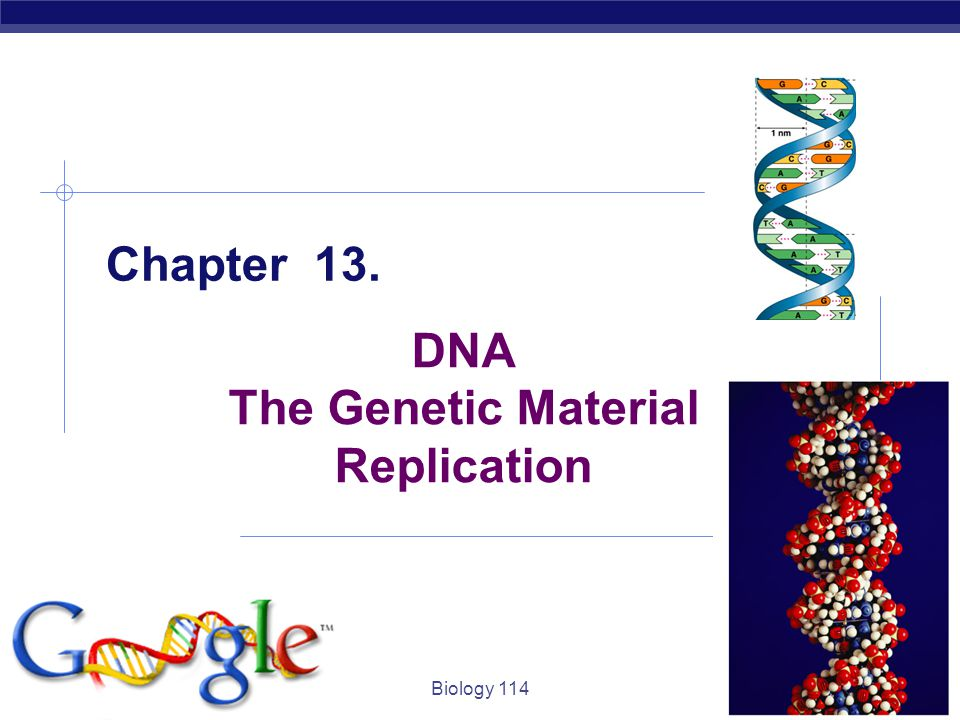 DNA The Genetic Material Replication