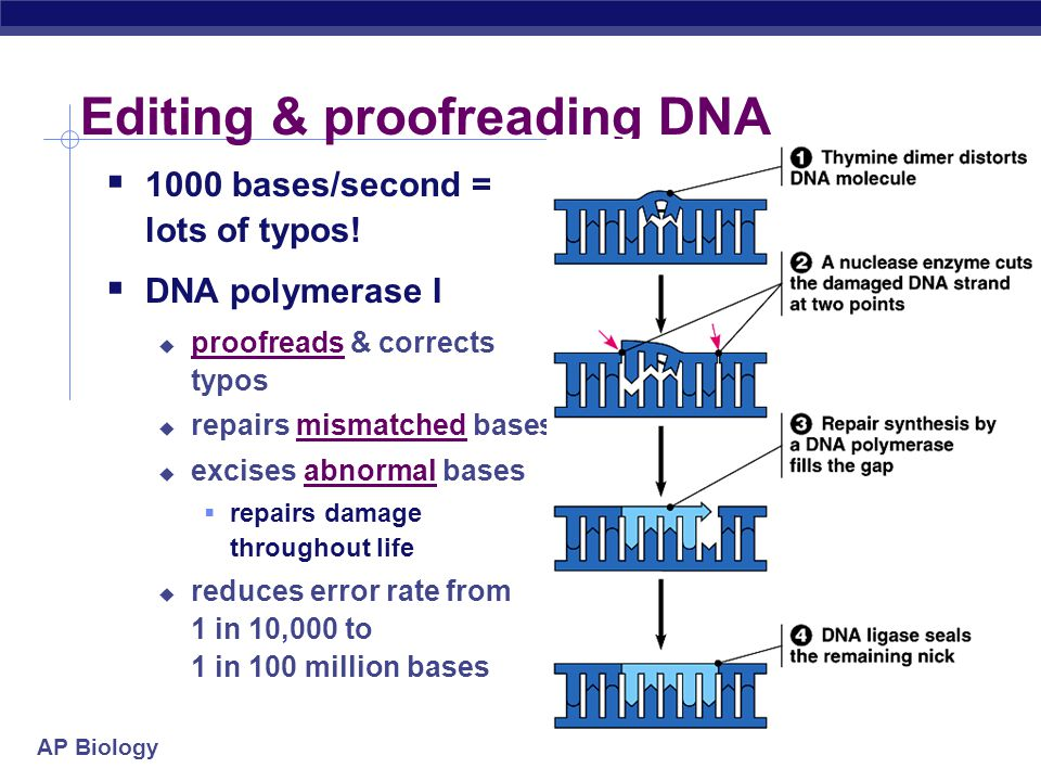 Editing & proofreading DNA
