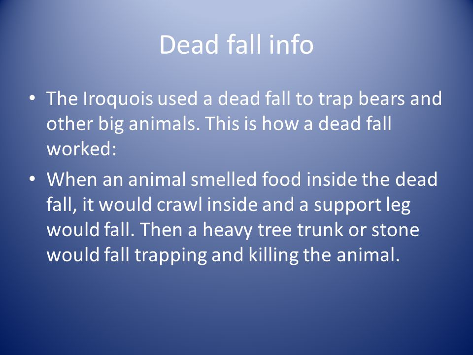 Dead fall info The Iroquois used a dead fall to trap bears and other big animals. This is how a dead fall worked: