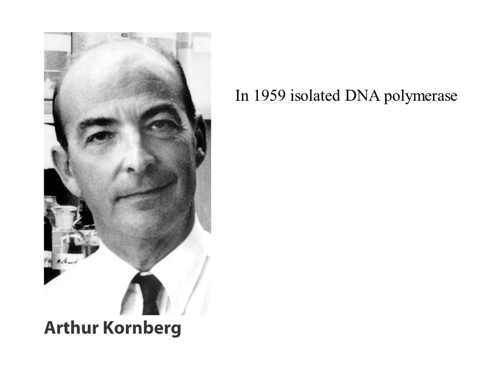 In 1959 isolated DNA polymerase