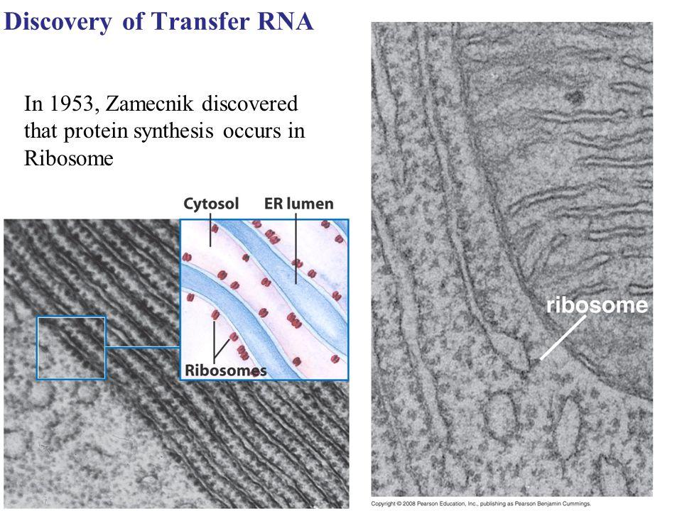 Discovery of Transfer RNA