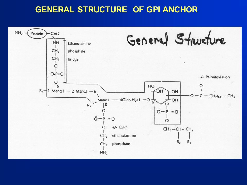 GENERAL STRUCTURE OF GPI ANCHOR