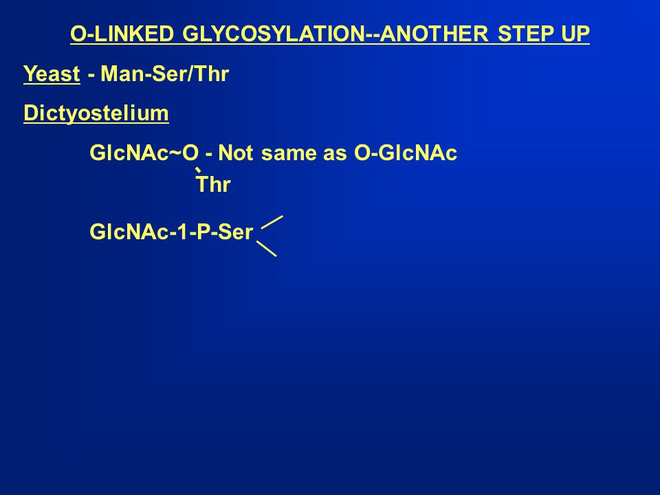 O-LINKED GLYCOSYLATION--ANOTHER STEP UP