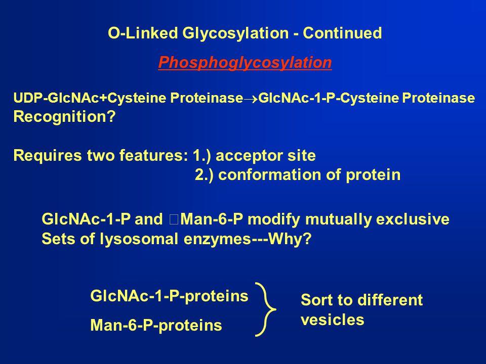 O-Linked Glycosylation - Continued Phosphoglycosylation