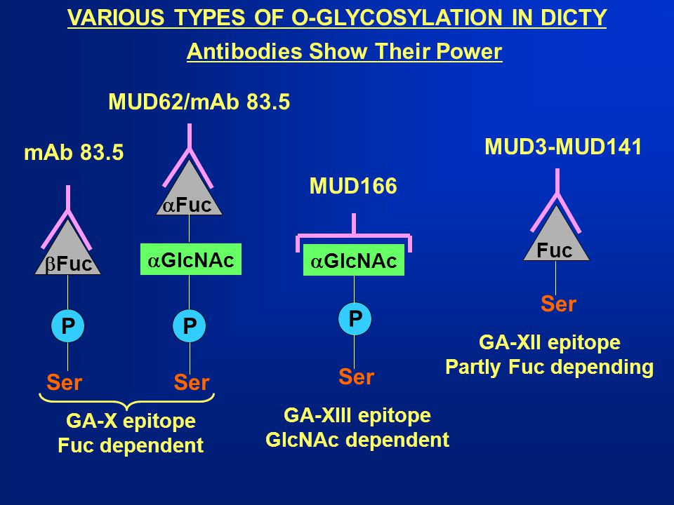 VARIOUS TYPES OF O-GLYCOSYLATION IN DICTY