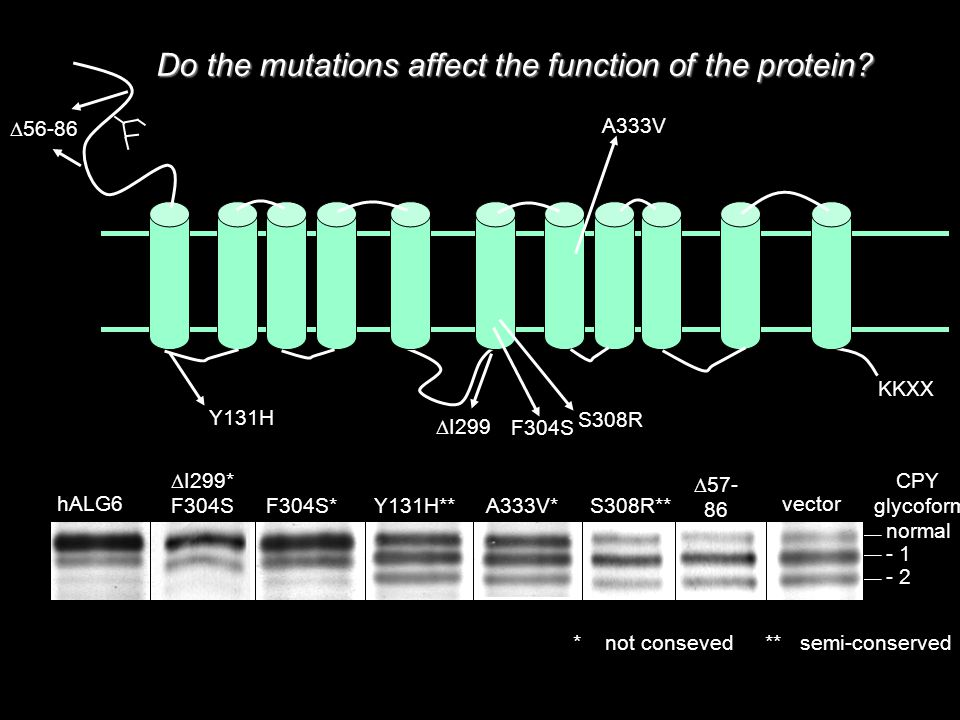 Do the mutations affect the function of the protein
