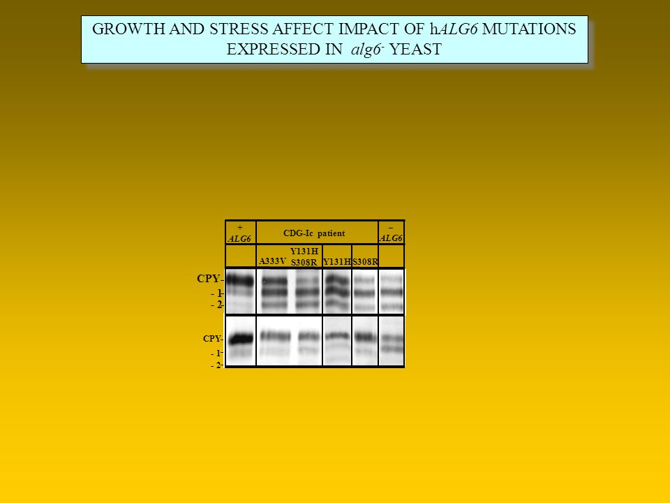 GROWTH AND STRESS AFFECT IMPACT OF hALG6 MUTATIONS