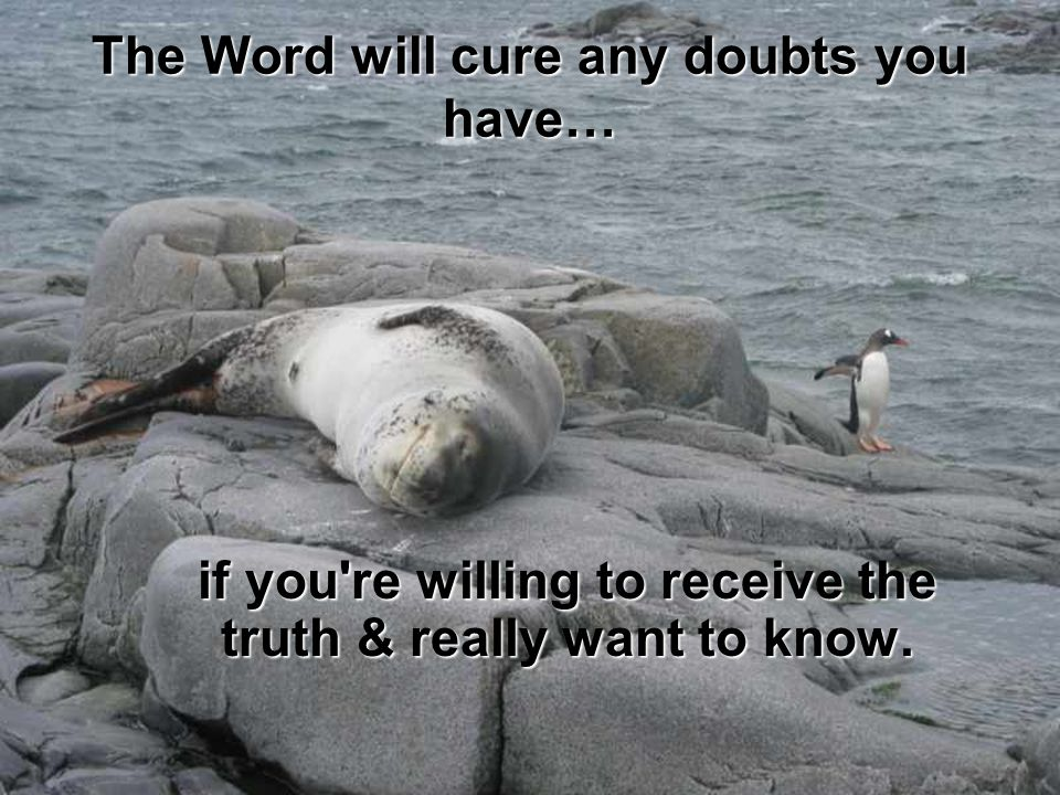 The Word will cure any doubts you have…