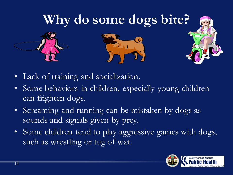 Why do some dogs bite Lack of training and socialization.