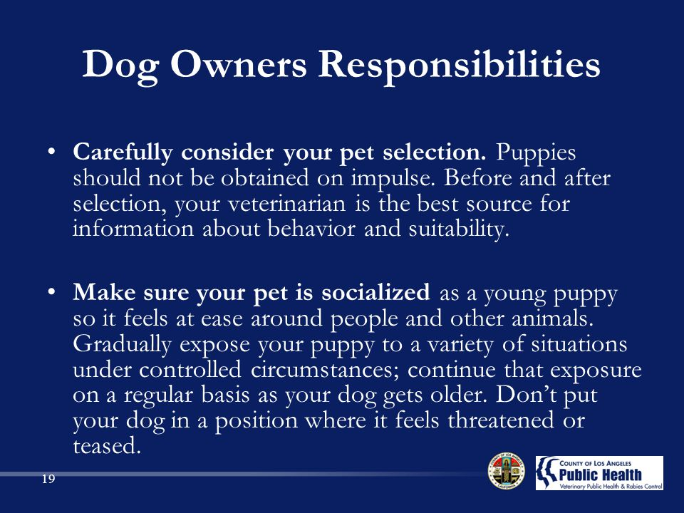 Dog Owners Responsibilities