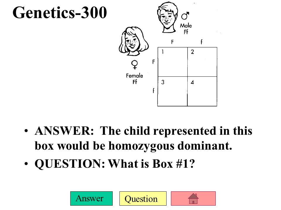 Genetics-300 ANSWER: The child represented in this box would be homozygous dominant.