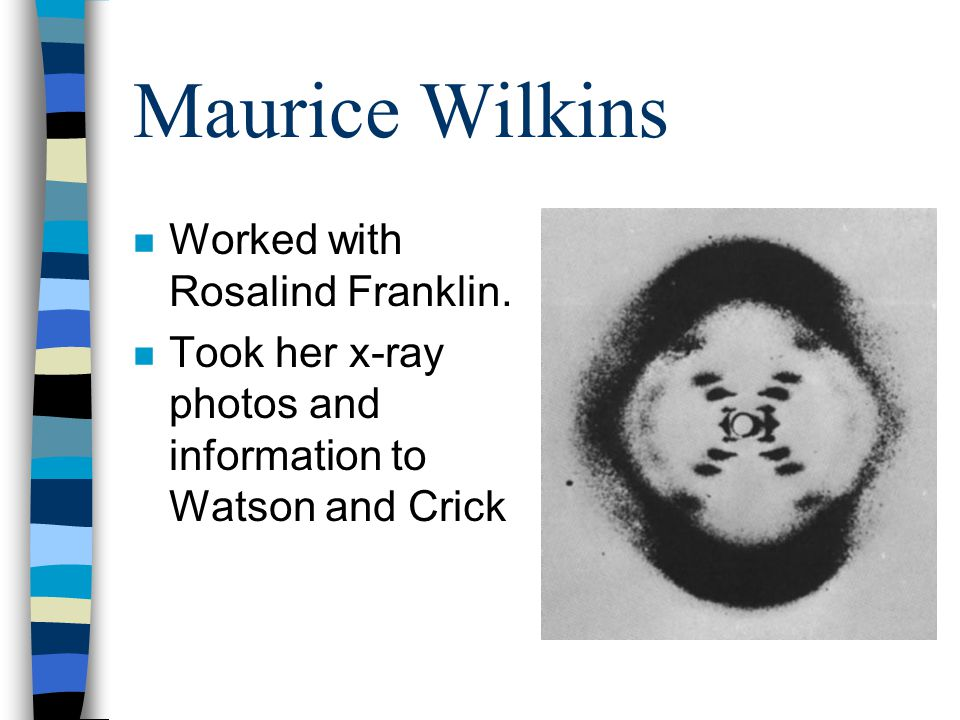 Maurice Wilkins Worked with Rosalind Franklin.
