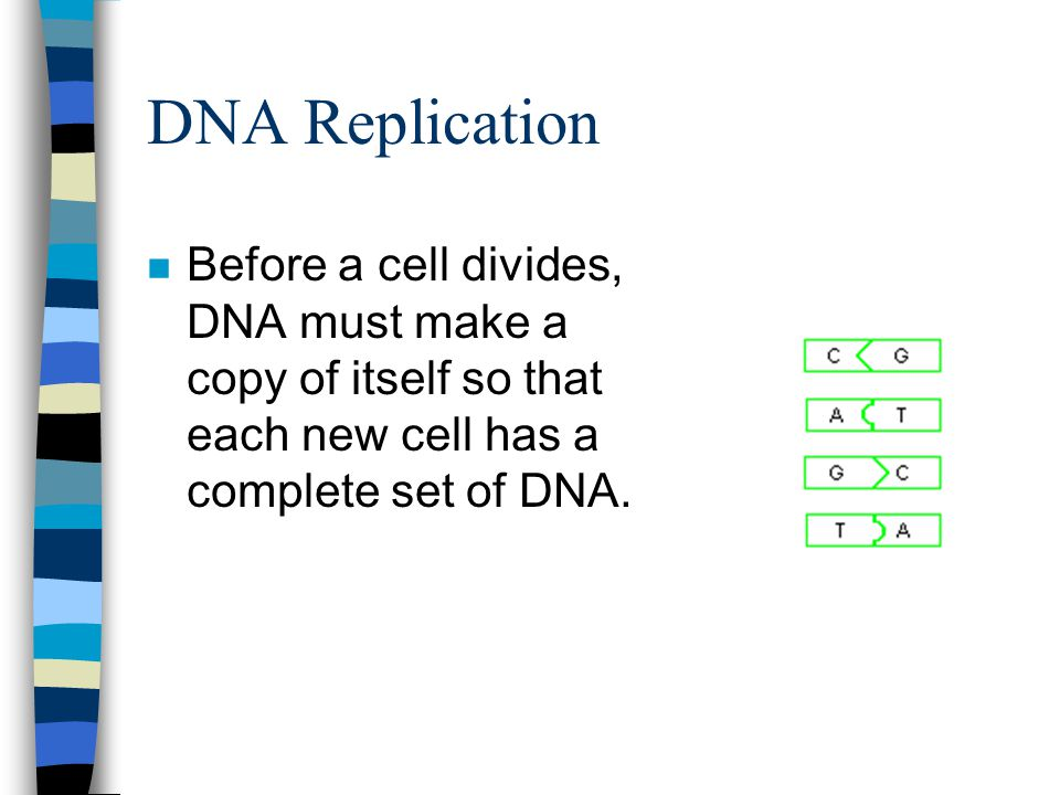 DNA Replication Before a cell divides, DNA must make a copy of itself so that each new cell has a complete set of DNA.
