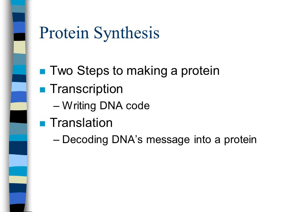 Protein Synthesis Two Steps to making a protein Transcription