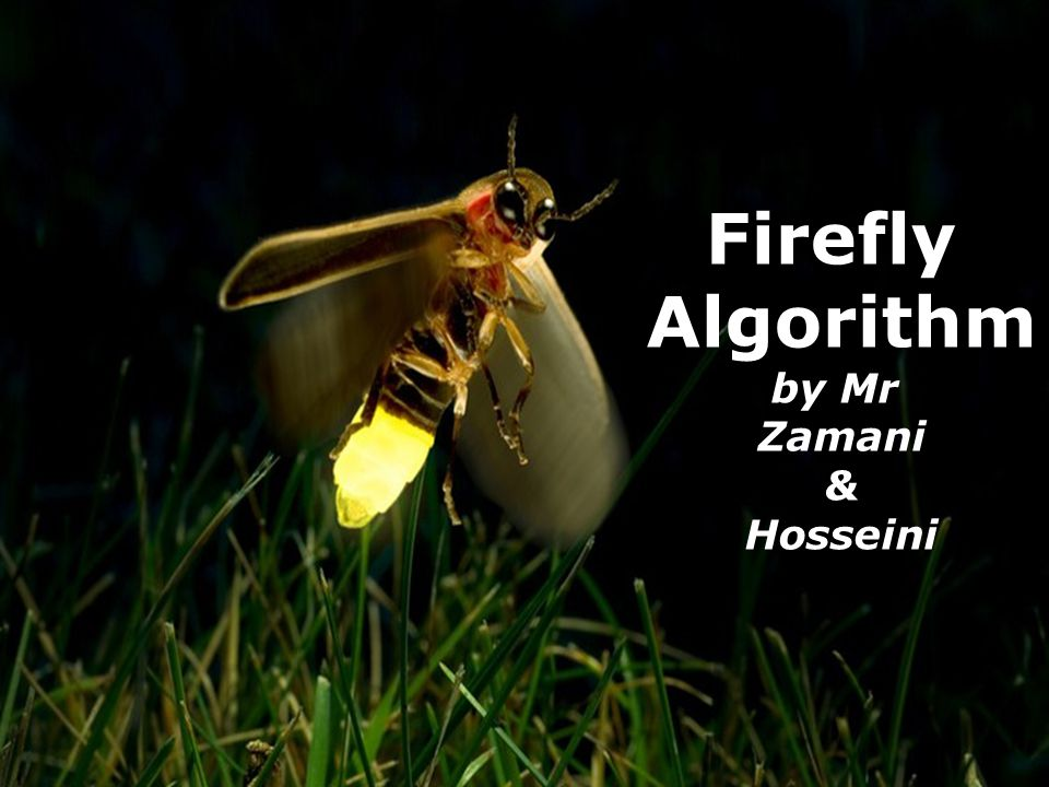 Firefly Algorithm by Mr Zamani & Hosseini