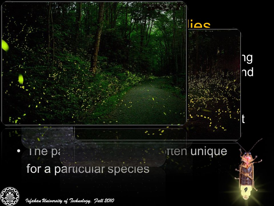 Behavior of Fireflies The flashing light of fireflies is an amazing sight in the summer sky in the tropical and temperate regions.