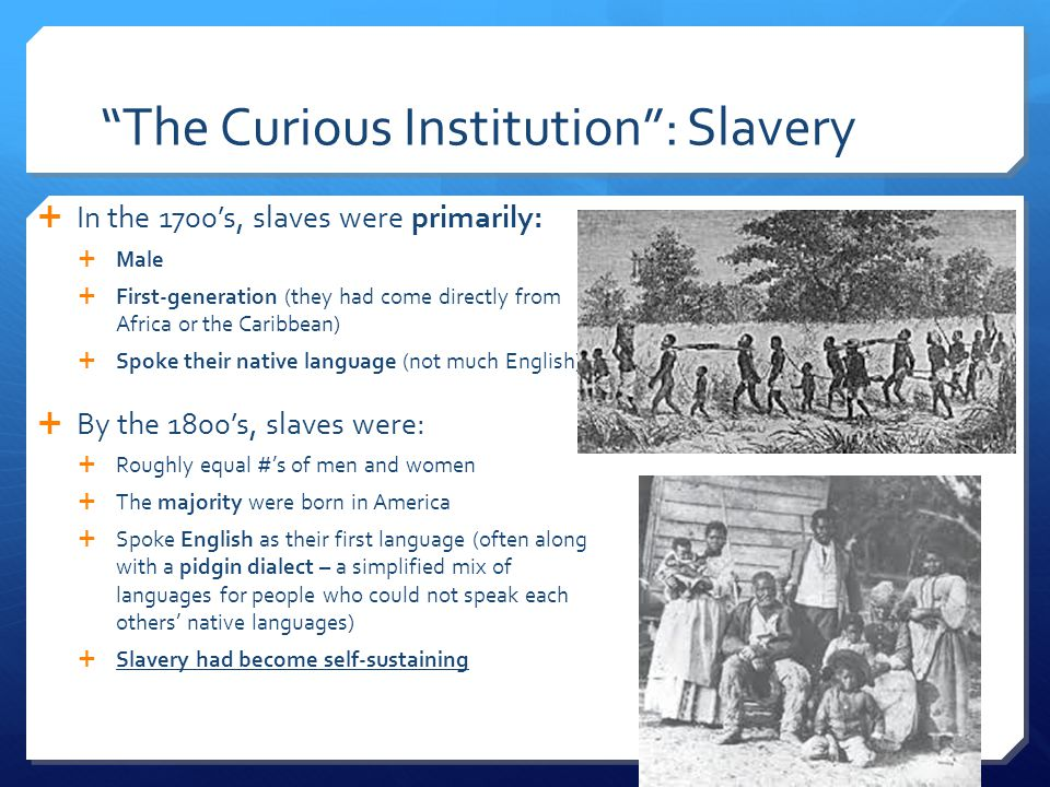 The Curious Institution : Slavery