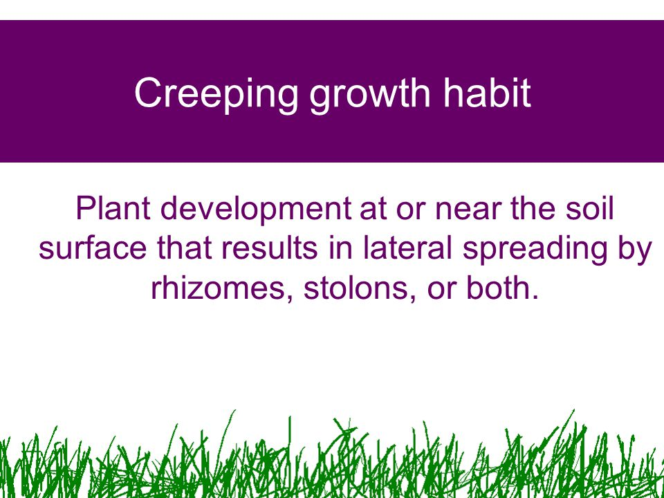 Creeping growth habit Plant development at or near the soil surface that results in lateral spreading by rhizomes, stolons, or both.