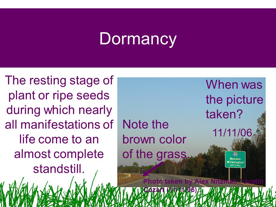 Dormancy The resting stage of plant or ripe seeds during which nearly all manifestations of life come to an almost complete standstill.
