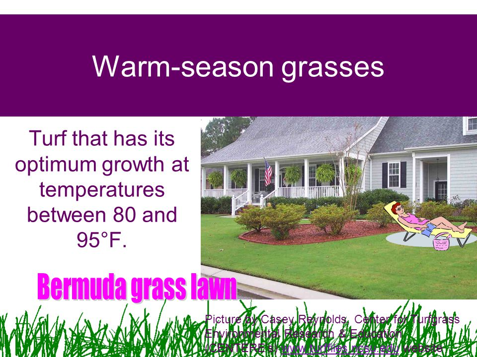 Turf that has its optimum growth at temperatures between 80 and 95°F.