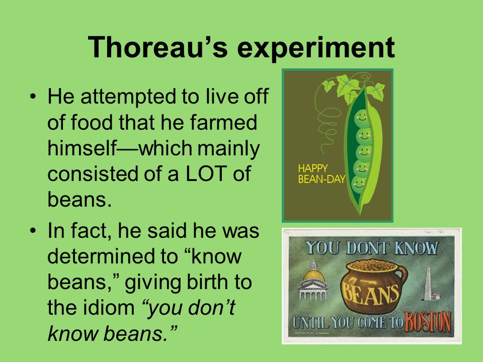 Thoreau's experiment He attempted to live off of food that he farmed himself—which mainly consisted of a LOT of beans.