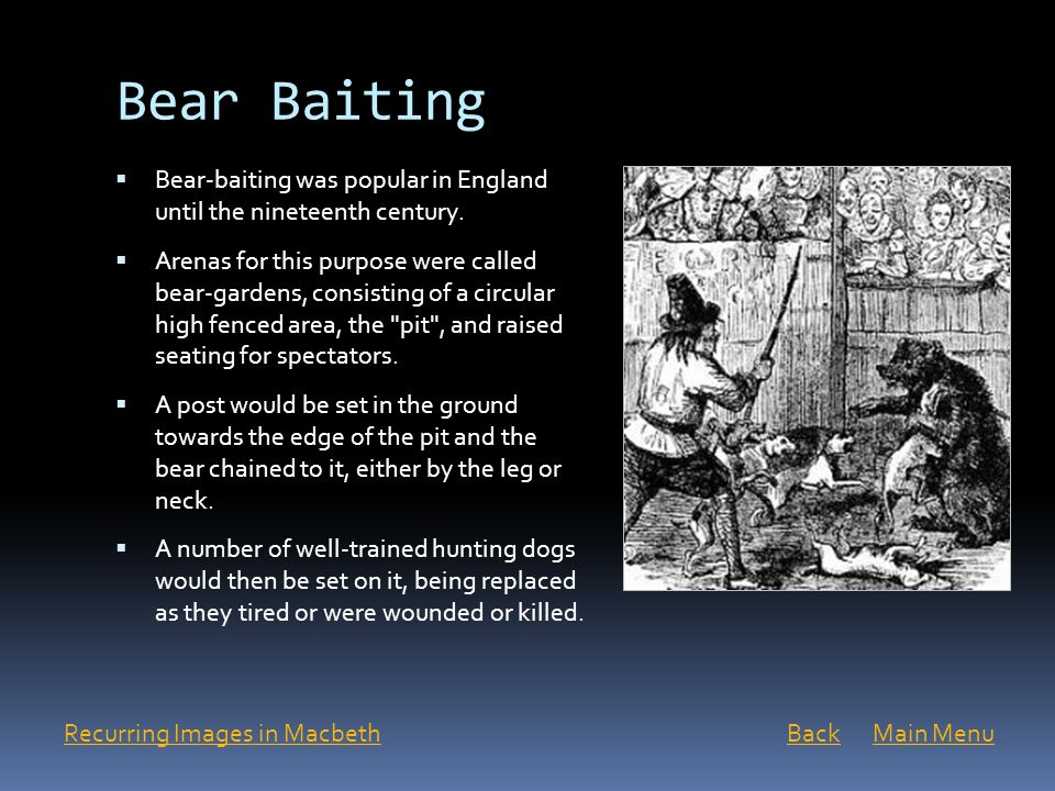 Bear Baiting Bear-baiting was popular in England until the nineteenth century.