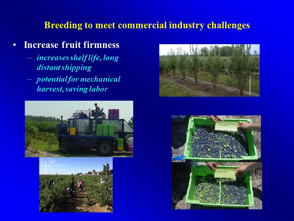 Breeding to meet commercial industry challenges